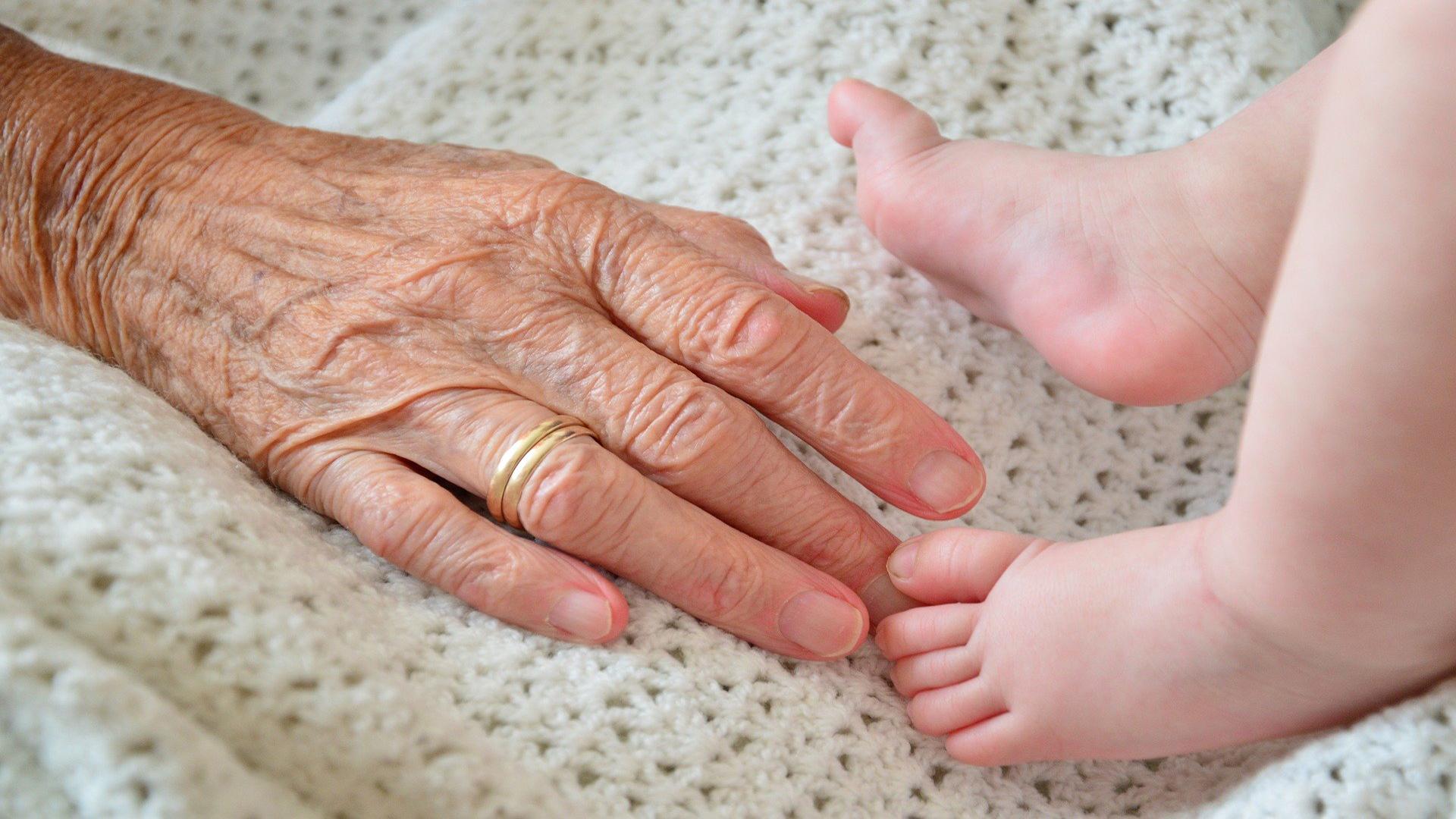 Red de Investigación de Bienestar y Calidad de Vida de Ancianos frágiles y sus Familias